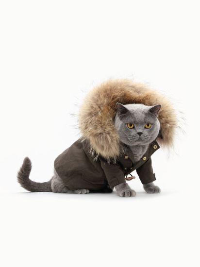 I Gatti Fanno Moda Ecco Una Sfilata Felina Lunga Dodici Mesi