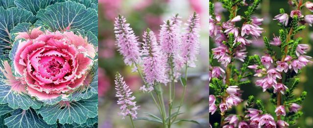 Questi fiori amano il freddo for Piante che amano il sole