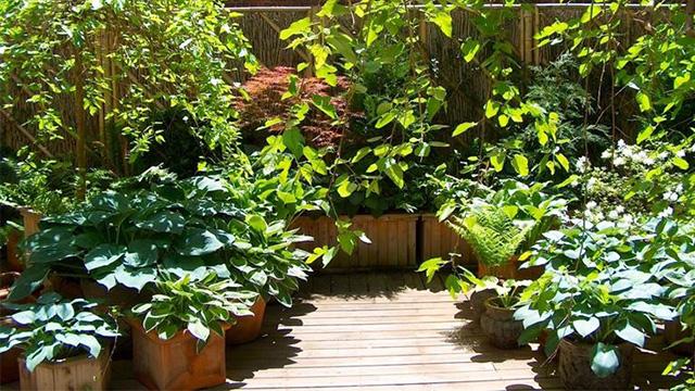 Arriva il 39 39 bonus verde 39 39 detrazioni per la cura di for Giardino in terrazza