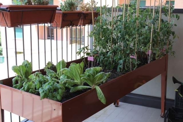 Orto sul balcone, 6 dritte per crearlo al meglio - Palermomania.it